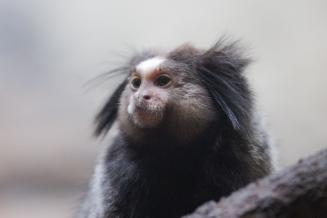 Nazwy tej malpki nie ma nawet na oficjalne stronie Zoo
